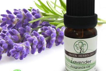 Skin Essential Plant Fragrant Lavender Oil
